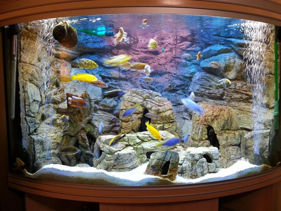 Fish Tank Ideas to Keep Your Fish Happy