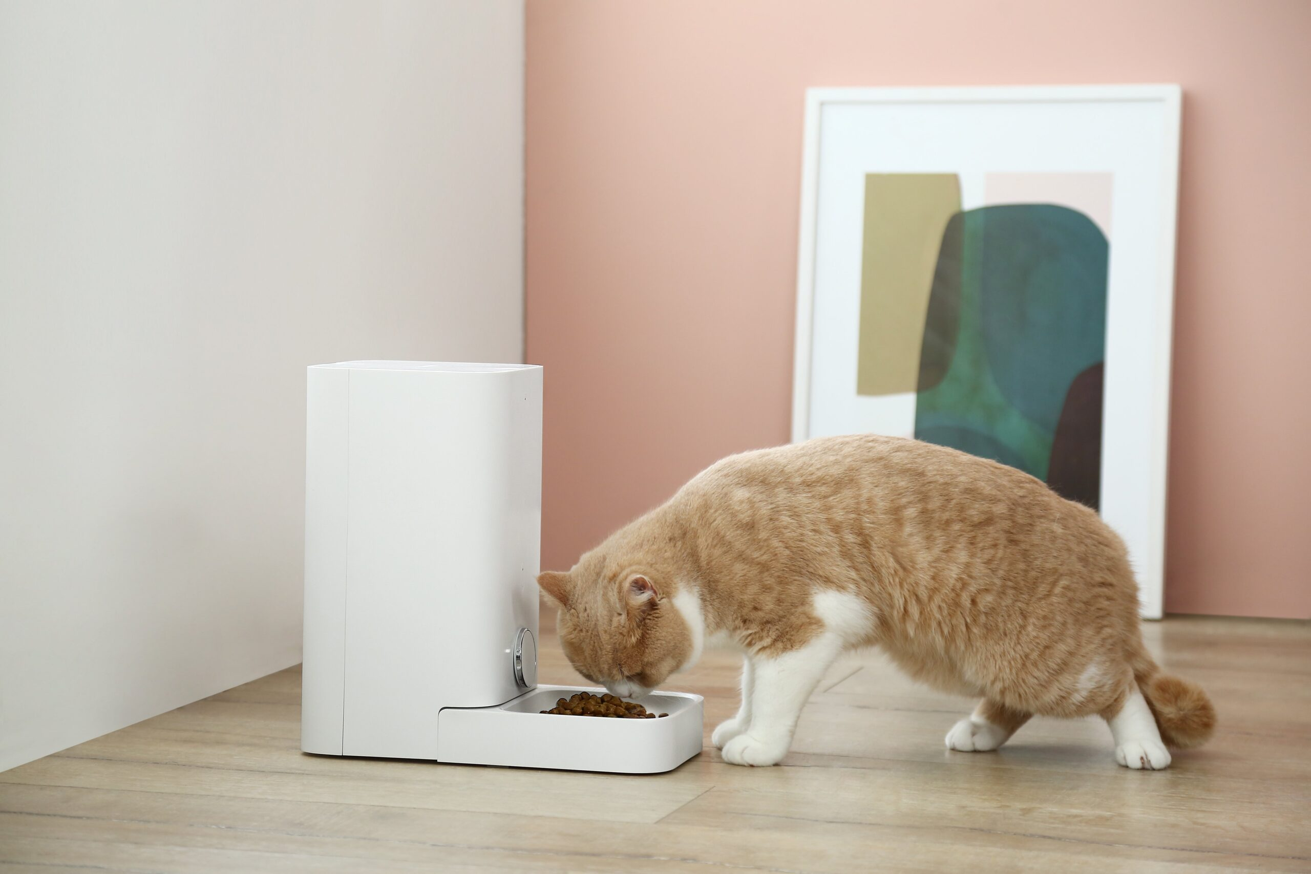 An Important Feature For an Automatic Cat Feeder to Have