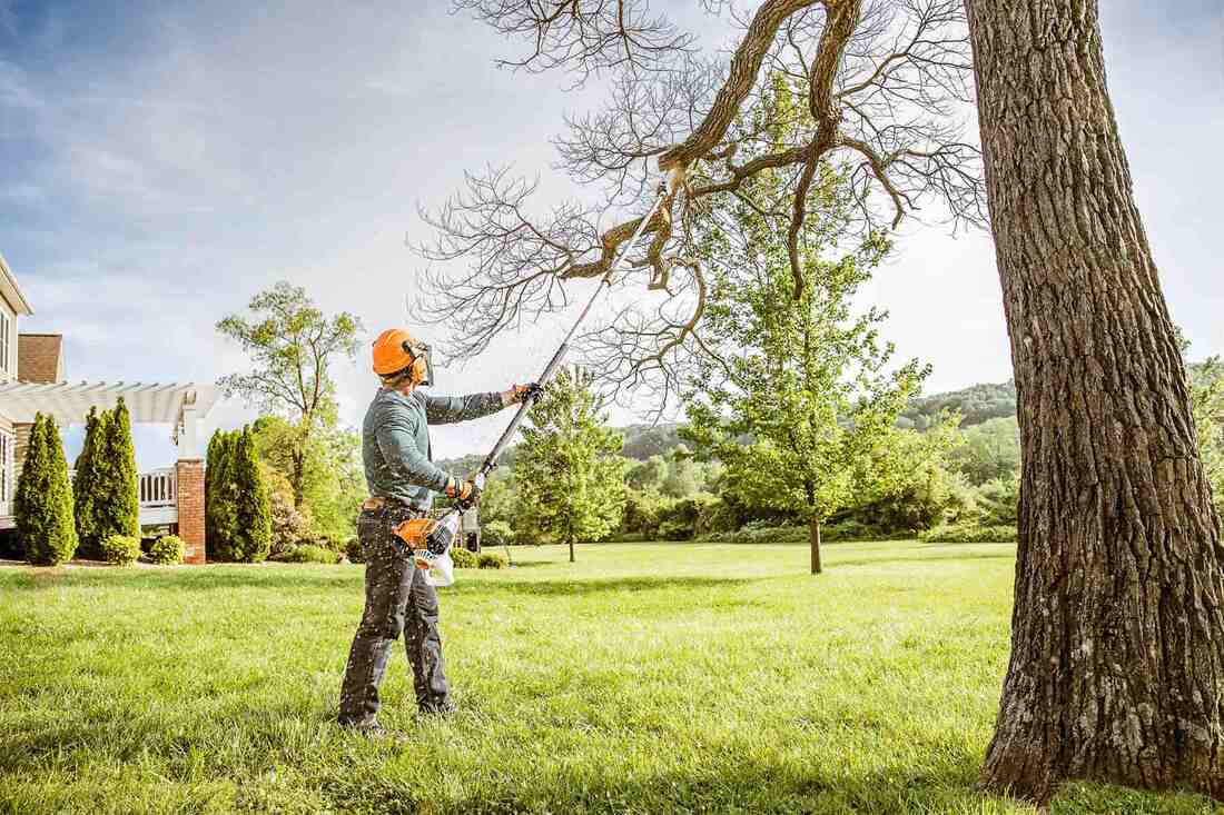 Advantages of Hiring Tree Removal Services
