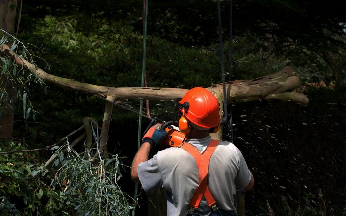 Using Tree Service to Make Family Time More Special