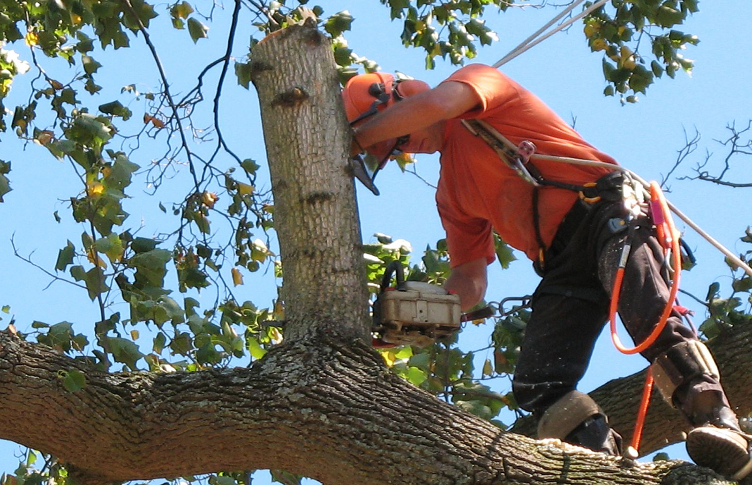 Tree Servicing Tips Everyone Should Keep in Mind
