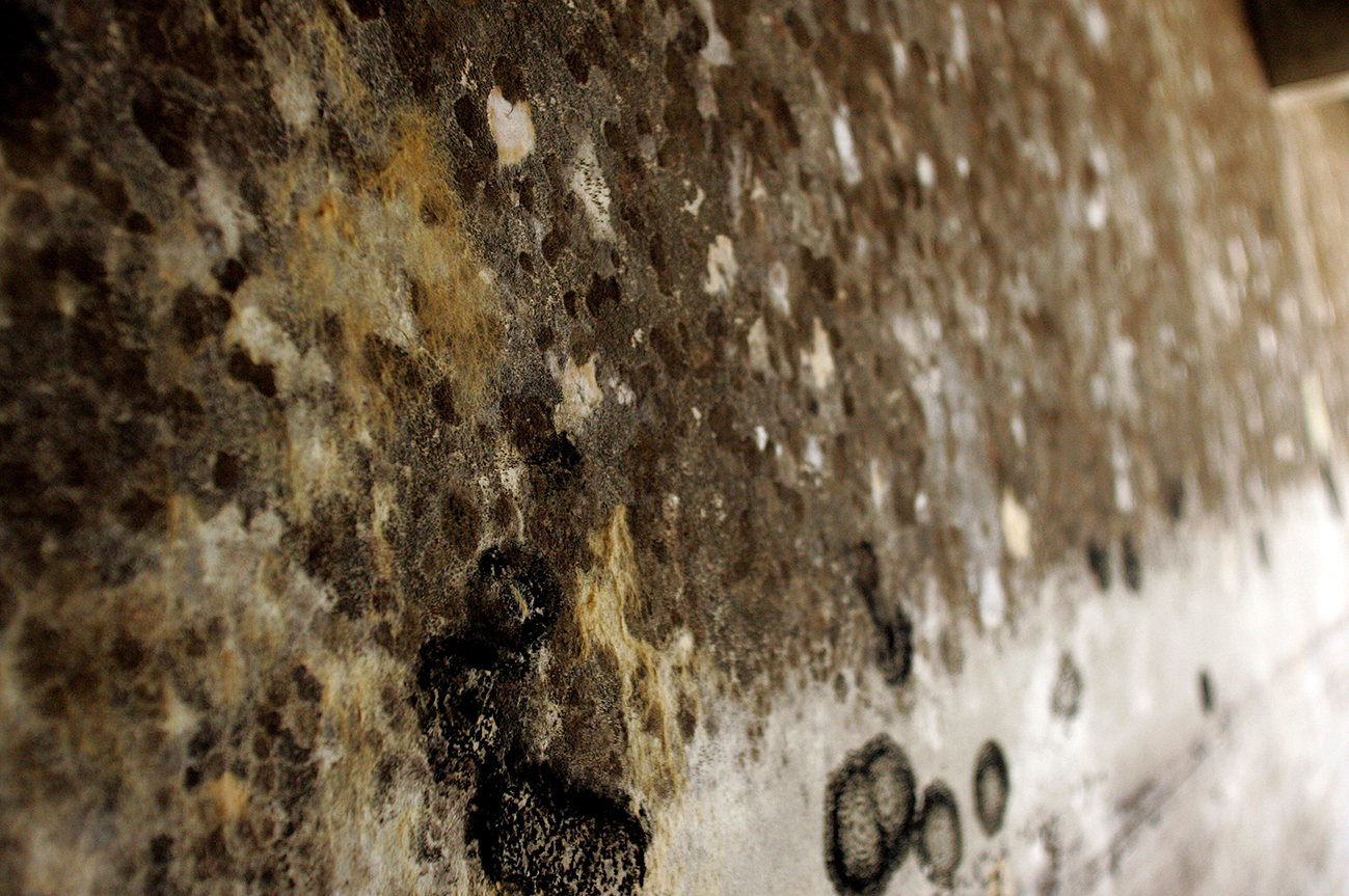 Benefits of Getting Black Mold Removed By Professionals