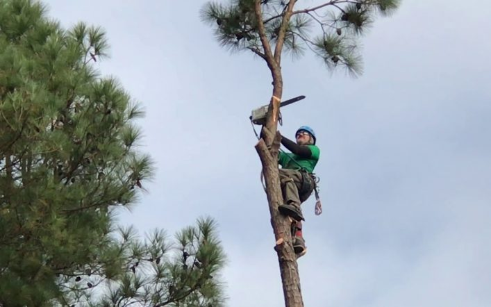 The Benefits of Getting an Arborist For Your Trees