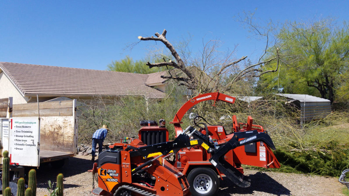 Only Use Organic Fertilizers During Tree Service