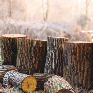 Advantages of Tree Servicing That You Should Know