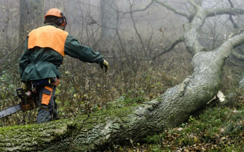 Things You Did Not Know About Tree Removal