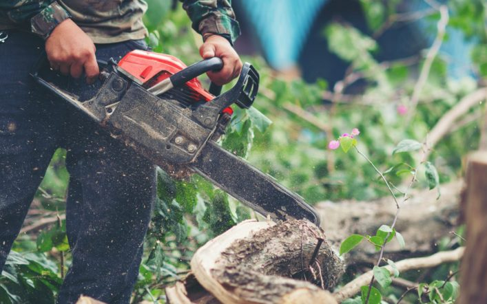 Everything That You Need to Know About Tree Removal