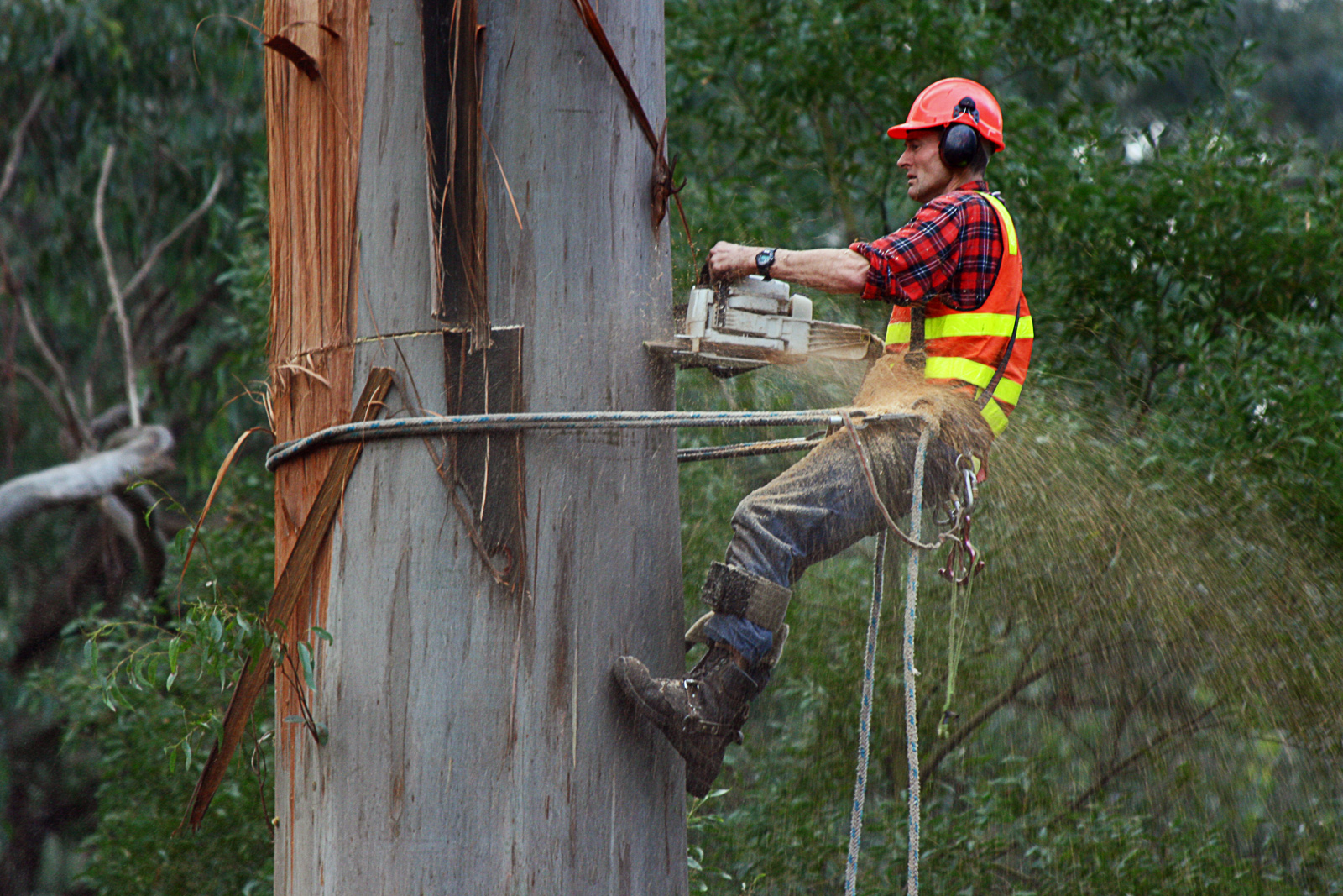Why You Should Never Do Tree Service Yourself