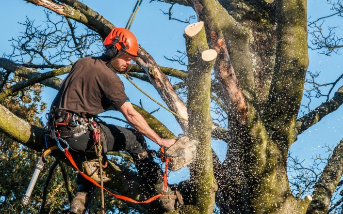 How Tree Care Can Help Us on Other Planets